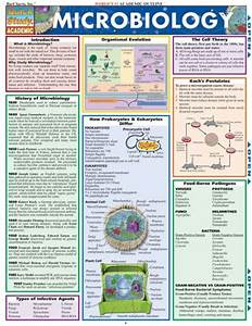1000  Images About Microbiology On Pinterest