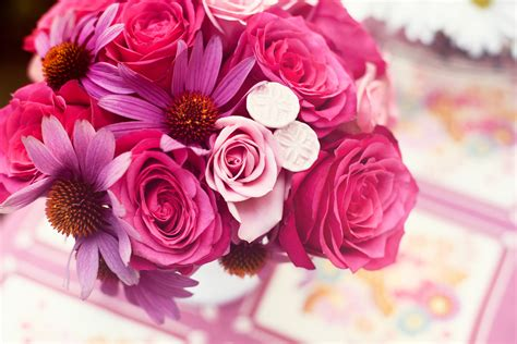 marguerite bureau flowers images pink flowers hd wallpaper and background