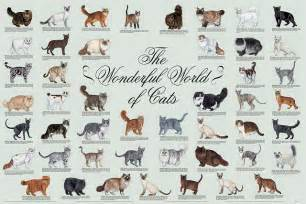 how many cats are in the world 1000 images about breeds of cats on