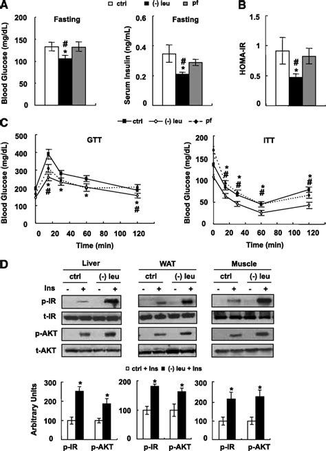 leucine deprivation increases hepatic insulin sensitivity