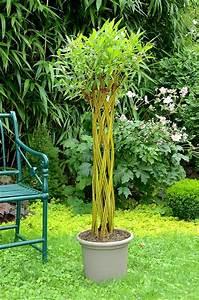 Pot Pour Arbre : arbre twisty tree en pot osier vivant ~ Dallasstarsshop.com Idées de Décoration