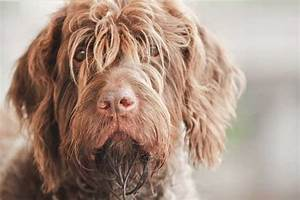 30 Best Hunting Dogs & Gun Dog Breeds for All Types of ...