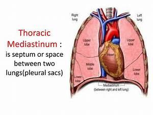 Ppt - Mediastinum And Diaphragm Powerpoint Presentation