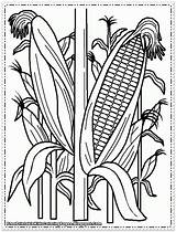 Corn Coloring Pages Printable Cornfield Indian Cob Field Drawing Plant Sweet Wheat Stalks Farm Drawings Sheets Cool Getdrawings Preschool Candy sketch template