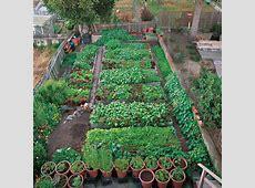 107 best images about Urban Kitchen Garden on Pinterest