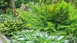 Farn Im Garten : farne pflegen als zimmerpflanze und im garten ratgeber garten zierpflanzen ~ Orissabook.com Haus und Dekorationen