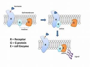 Structural Biochemistry  G Proteins
