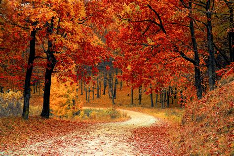 Its Almost Leaf Peeping Season Where To See The Best