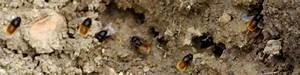 Nid De Guepe Dans Le Sol : les abeilles sauvages abeilles sauvages ~ Dailycaller-alerts.com Idées de Décoration