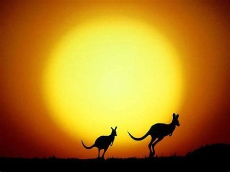 perceived australian culture educ1708
