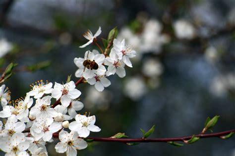 Pavasaris | Plants