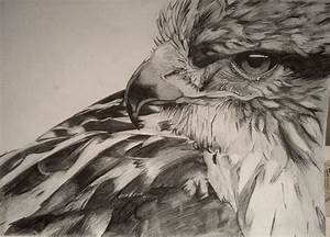 Hawk - Pencil Drawing | Art Is For Your Heart | Pinterest