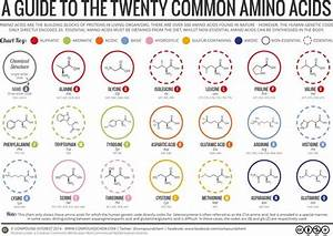 A Brief Guide To The Twenty Common Amino Acids