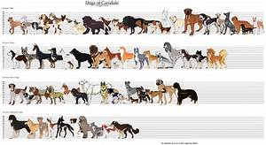 Dog Size Chart - Sizing chart shabby chic dog boutique ...
