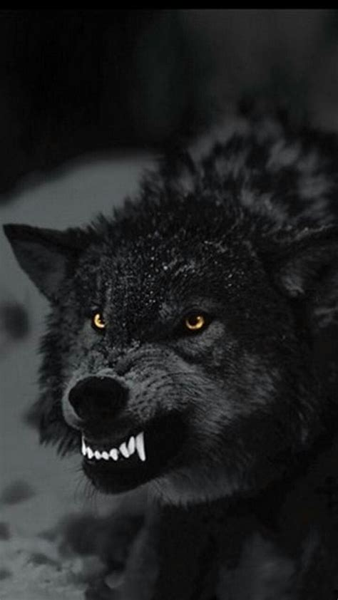Angry Wolf Wallpaper Black by Bite Away Nothing Will Change Stuff Wolf Angry