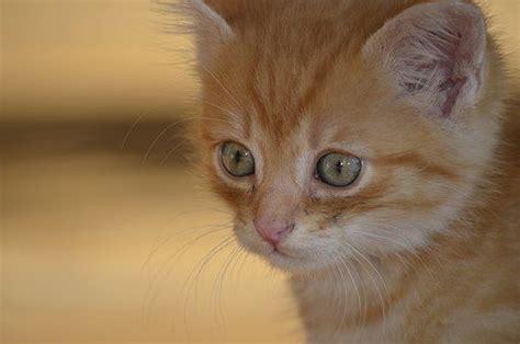 kitten nature images pixabay kitten