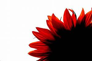 Schwarz Weiß Bilder Mit Rot : schwarz wei rot foto bild verfremdung geschl x ~ A.2002-acura-tl-radio.info Haus und Dekorationen