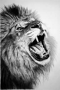 17+ Lion Drawings, Pencil Drawings, Sketches | FreeCreatives