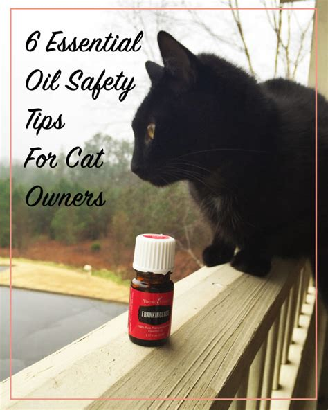 cats essential oils 6 essential oil safety tips for cat owners meow lifestyle