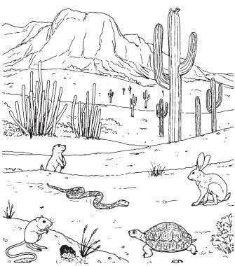 animals adapt  desert life  grade science