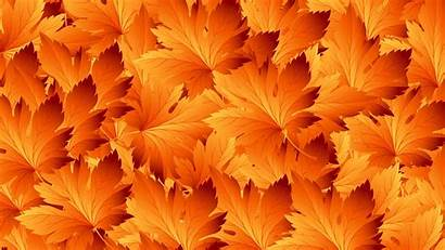 Autumn Leaves Patterns Texture Maple Widescreen Backgrounds