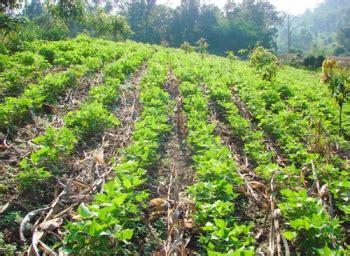 ปัญหาเกษตร ที่นีมีคำตอบ : การปลูกพืชบนพื้นที่ลาดชัน ...
