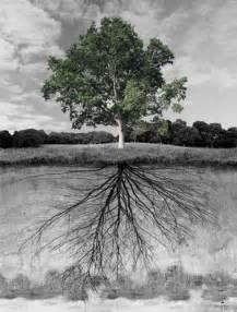 Tree with Roots Underground