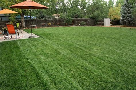 when to put sod thermal blue texas hybrid green valley turf company