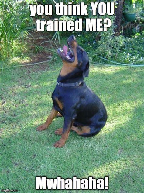 Rottweiler Memes - best rottweiler memes the rottweilers