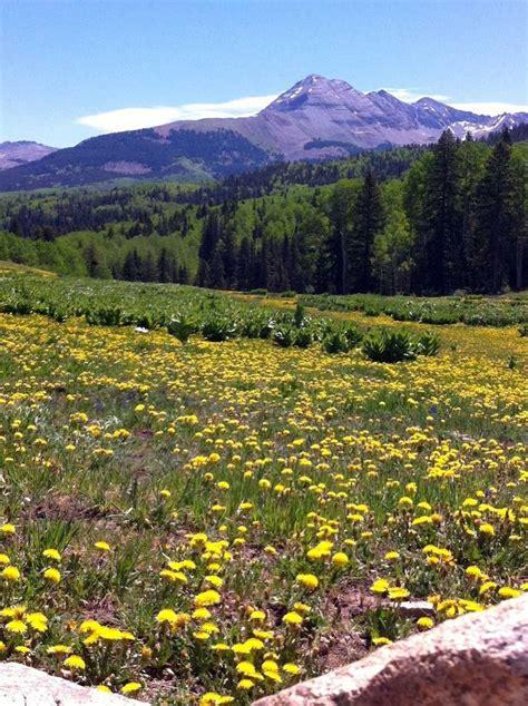 images  colorado wildflowers  pinterest