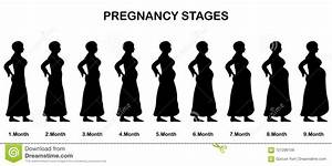 Pregnancy Stages In 9 Months