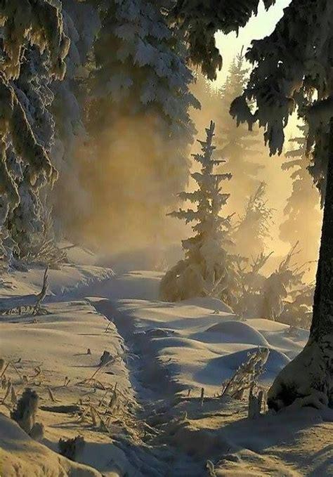 photo dhiver dans le monde nature hiver paysage