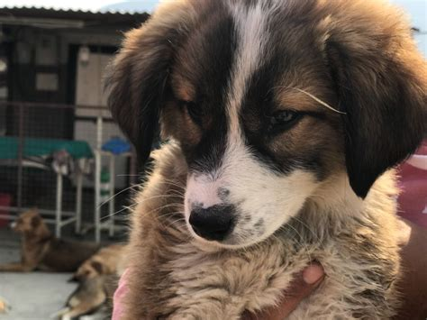 Rescuing A Dog From Abroad  International Adoption