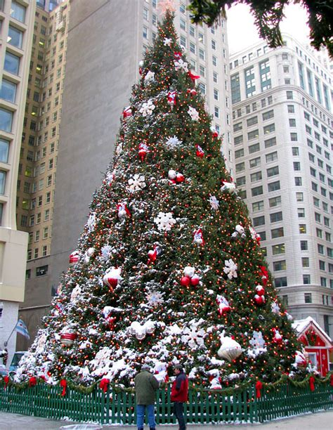 the history of the official chicago christmas tree 171 cbs