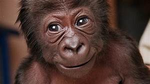 Gorilla in the internet's midst