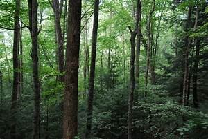 Welcome To Department Of Forestry  University Of Kentucky