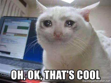 Oh Okay Meme - oh ok that s cool crying cat meme generator