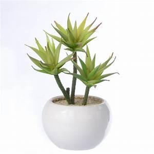 Succulentes Pas Cher : grossiste bonsai pas cher acheter les meilleurs bonsai pas cher lots de la chine bonsai pas cher ~ Melissatoandfro.com Idées de Décoration