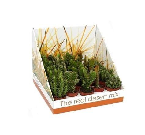 Kaktus Opuncija - Evergreen
