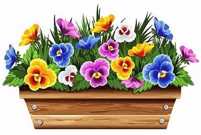 Flower Clip Clipart Box Violets Planter Garden