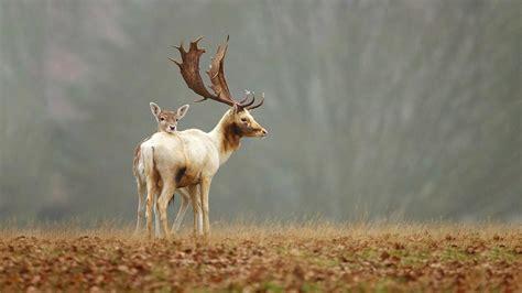 Hd Wallpaper Baby Animals - animals baby animals deer fawns wallpapers hd desktop