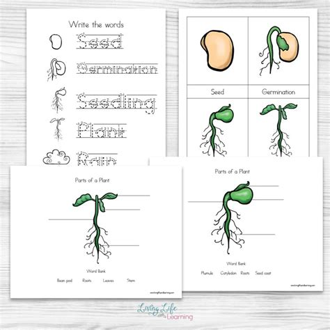 what we get from plants worksheet image collections free