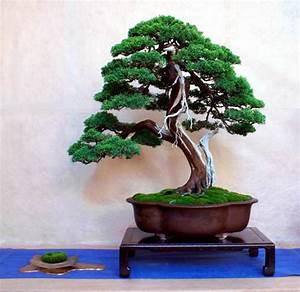 Wintergarten Kühl Halten : welcher ist denn nun der richtige bonsai forum de ~ Michelbontemps.com Haus und Dekorationen