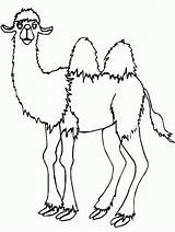 Camel Coloring Pages Coloringpages1001 sketch template