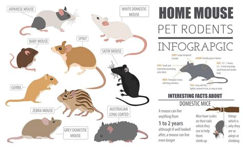 28 Common Types of Rodents In and Around Your Home