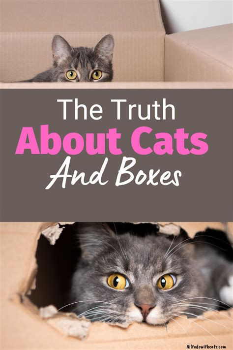 cats boxes why alltodowithcats truth much cat