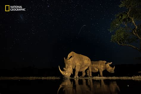 15 Amazing Entries From Nat Geo's Nature Photographer Of