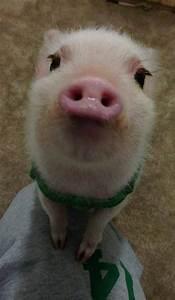 prettiest pig ever!.. | ★Cute Animals★ | Pinterest | Pigs ...