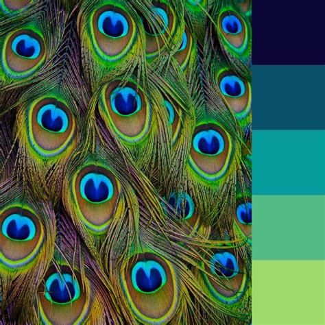 peacock color scheme peacock color palette for this month s coloring challenge