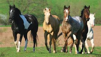 beautiful pictures of horses collection